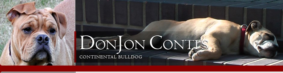 cropped-continental-bulldogs-header3.jpg